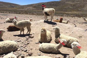 Pérou (Suite) Arequipa Chivay